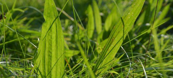 nejúčinnější bylinky na kašel